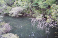 Scenic Australia photos. Small stream and forest.