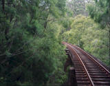 Picture of tram tracks disappearing in the woods.