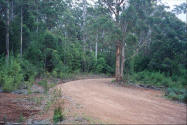 Red dirt road in the karri forest of Pemberton Western Australia.